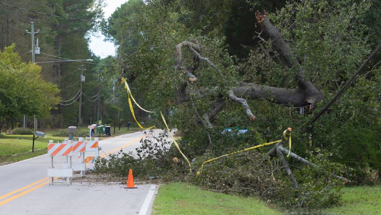 Hurricane Tree in Road